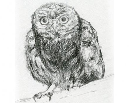 Croquis au crayon gris : animaux