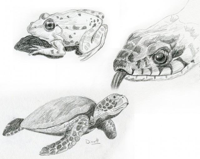 Croquis crayon animaux dinett illustration - Croquis animaux ...