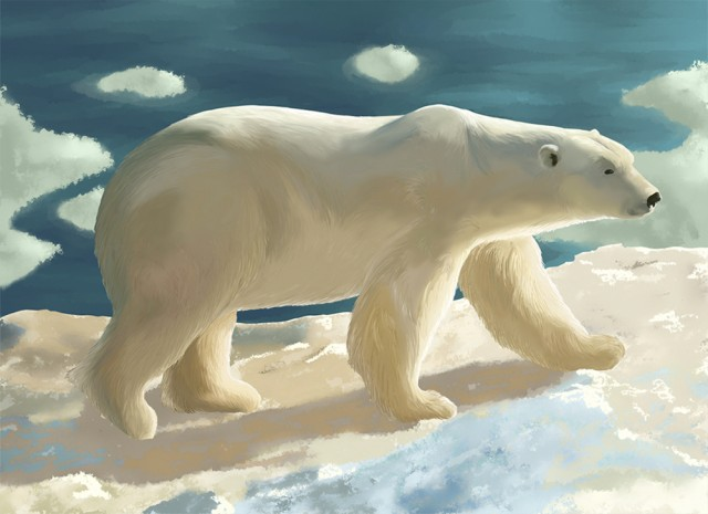 Illustration animale l'ours blanc