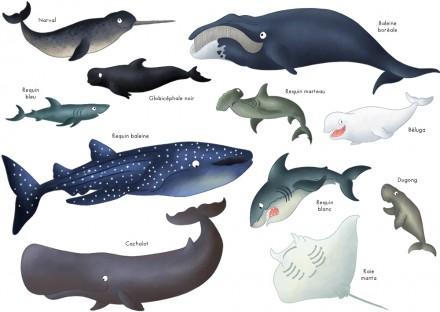 Imagier : les animaux marins