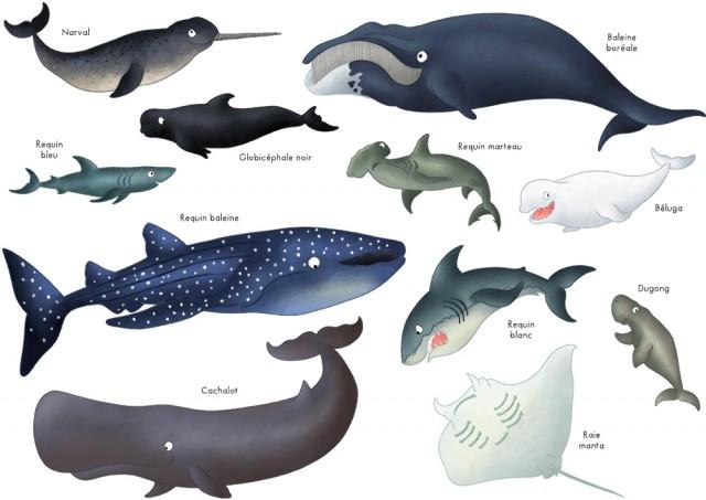 Imagier animaux marins