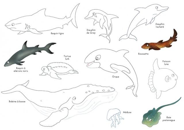 Coloriages les animaux des océans