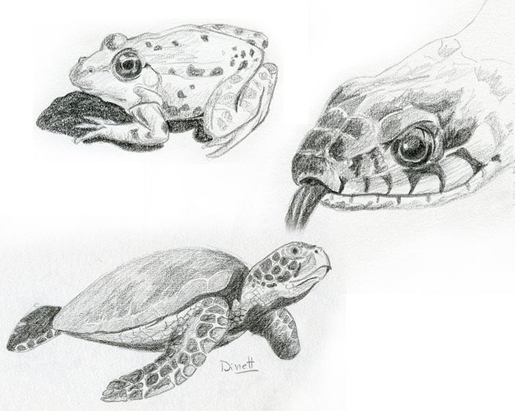 Croquis crayon animaux