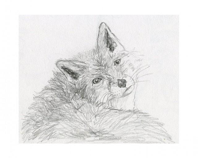 Croquis crayon le renard