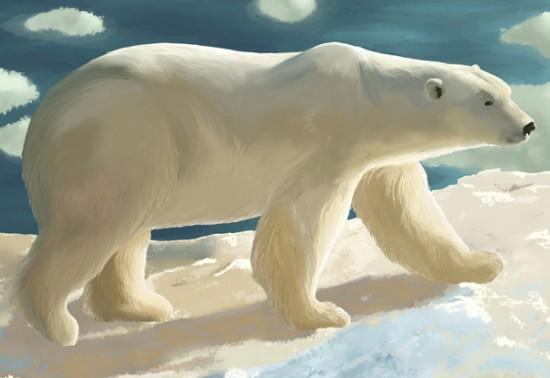 Illustration animale Amandine Alezard