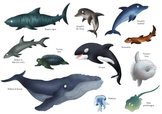 Imagier animaux océans