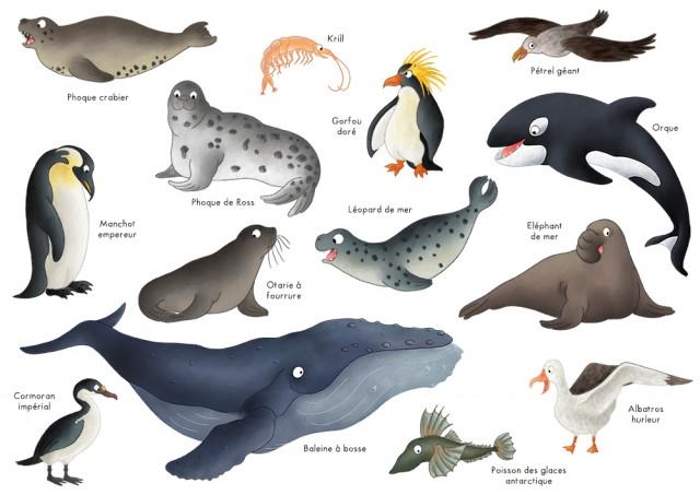 Imagier animaux de l'antarctique
