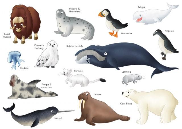 Imagier animaux de l'arctique