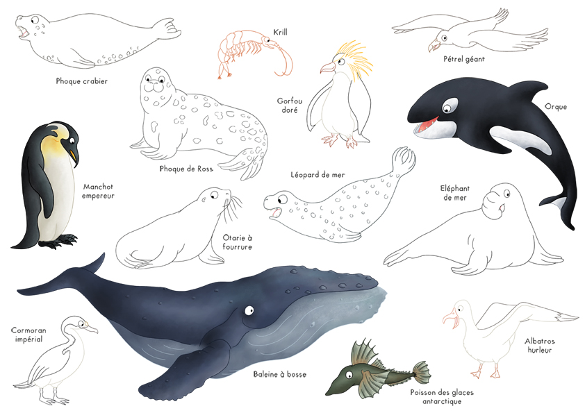 Coloriages planches d animaux dinett illustration - Animaux pole nord ...